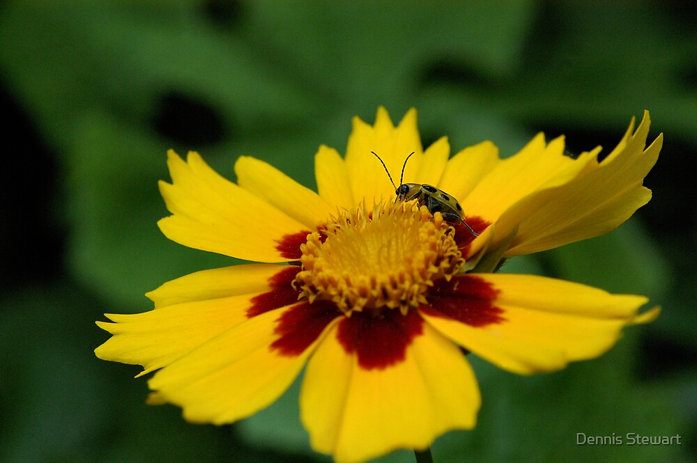 Beauty and the Bug by Dennis Stewart