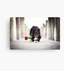Shetland Sheepdog with Rose Canvas Print