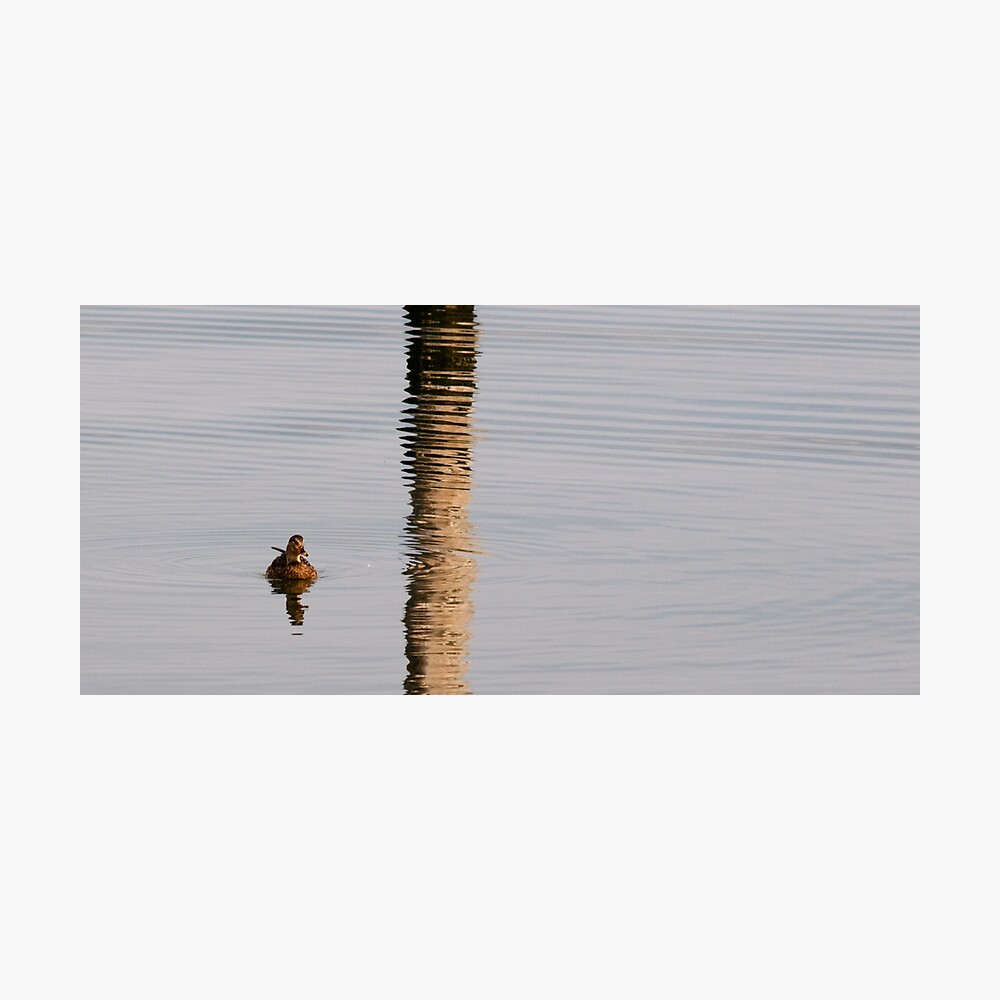 ripples of reflection Photographic Print
