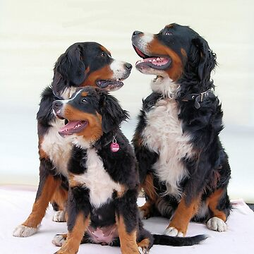 bernese mountain dog group by marasdaughter