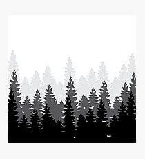 BW Forest  Photographic Print