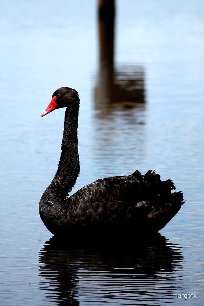 Black Swan by margotk