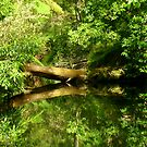 Fallen Tree - reflection by Of Land & Ocean - Samantha Goode