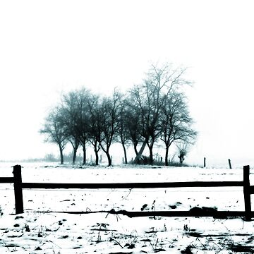 Winter Solitude landscape photography by borisow