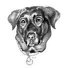 Tosh - Black Labrador Dog by Patricia Howitt