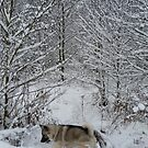Saga In Winter Woodland  by CreativeEm