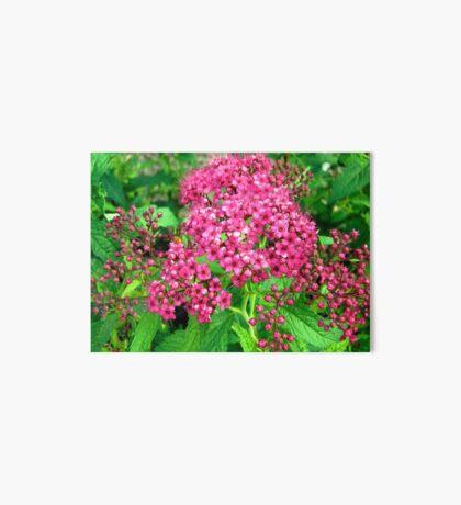 Pink Flowers Art Board
