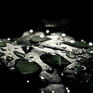 Leaf surface by Mojca Savicki