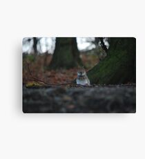 Small squirrel...Big World! Canvas Print