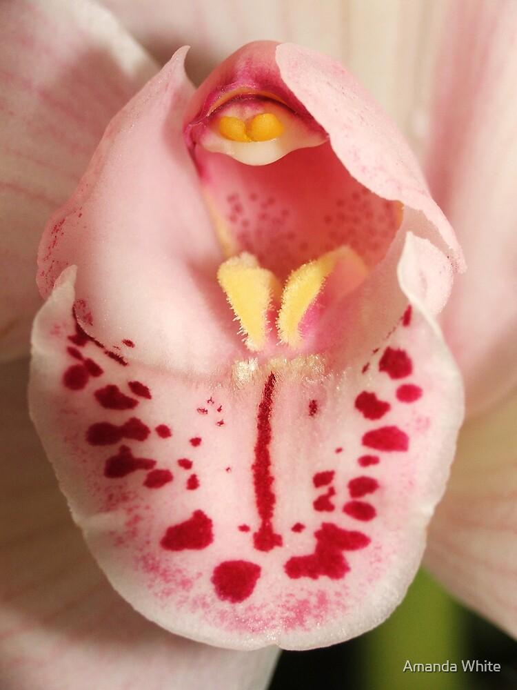 Tropical Beauty by Amanda White