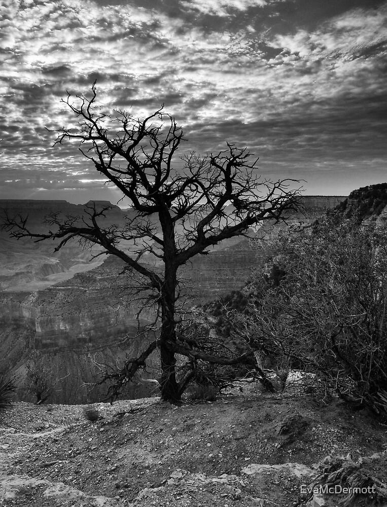 Dead Tree at Dawn by EvaMcDermott