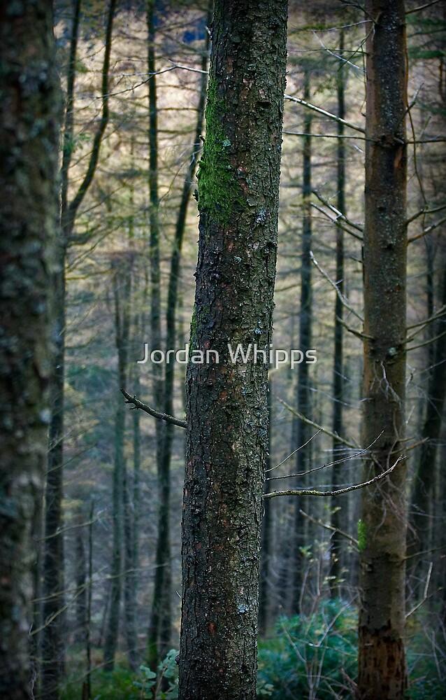 forest by Jordan Whipps