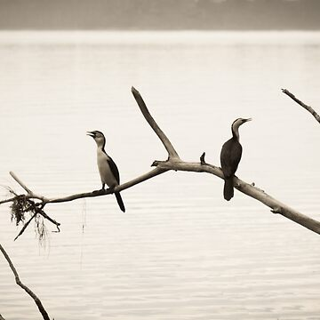 Cormorants - Talking to Themselves by pcbermagui