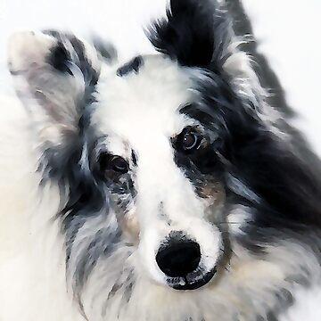 Elegant Ollie by BLynnBly