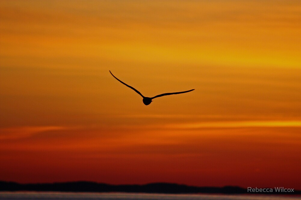 Morning Flight by Rebecca Brann