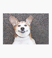Goofy beagle dog smiling Photographic Print