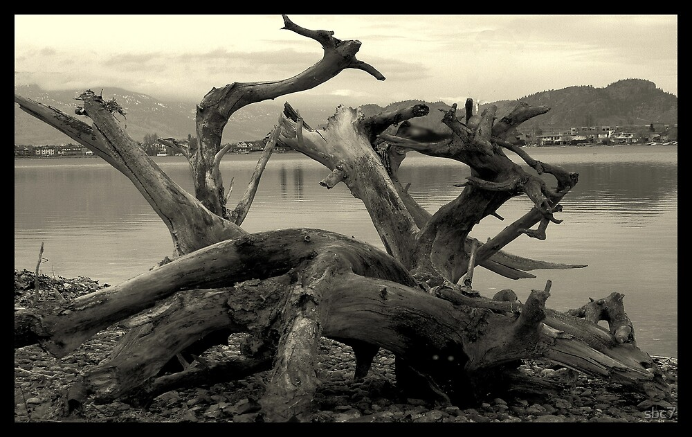 driftwood by sbc7
