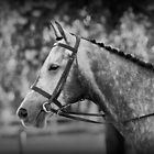 Grey Show Horse - Black And White Fine Art Photography by Michelle Wrighton