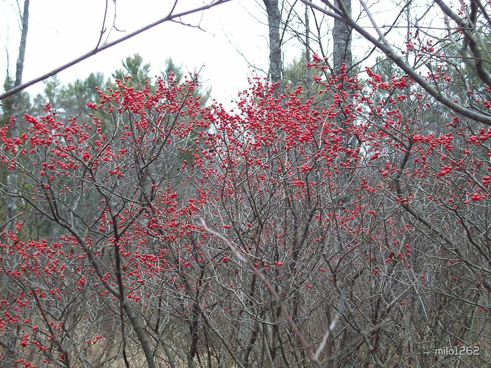 Lots of Berries by milo1262