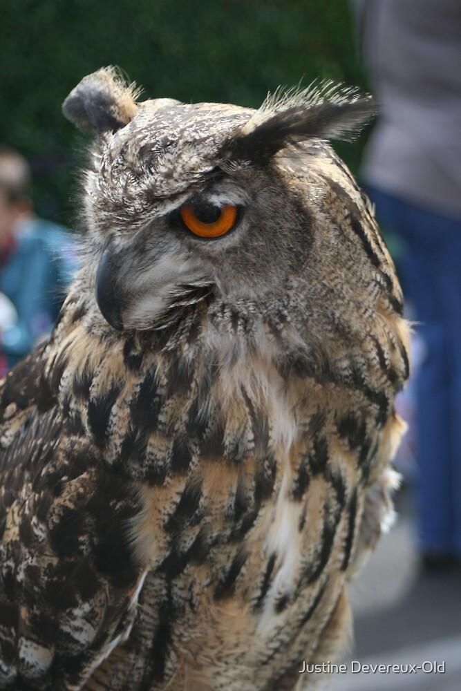 OWL by Justine Devereux-Old