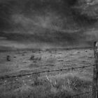 Stormy Fields by Clare Colins