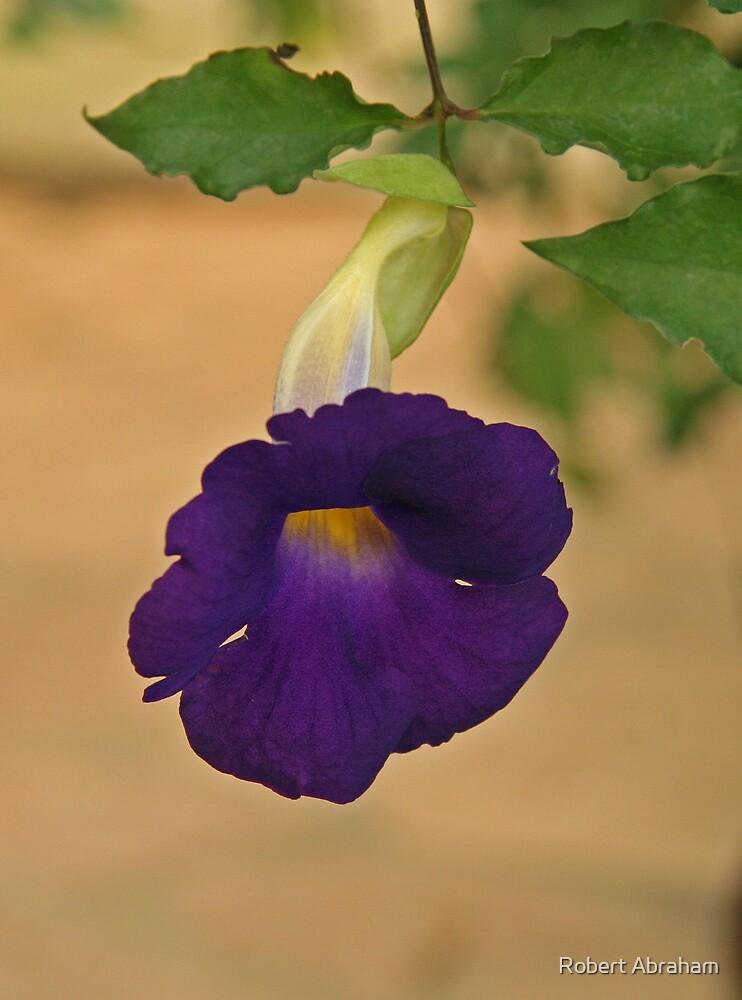 Tropical Flower by Robert Abraham
