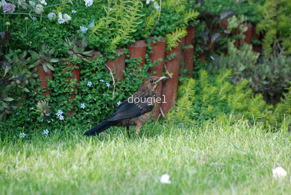 My Bird Garden 2 by dougie1