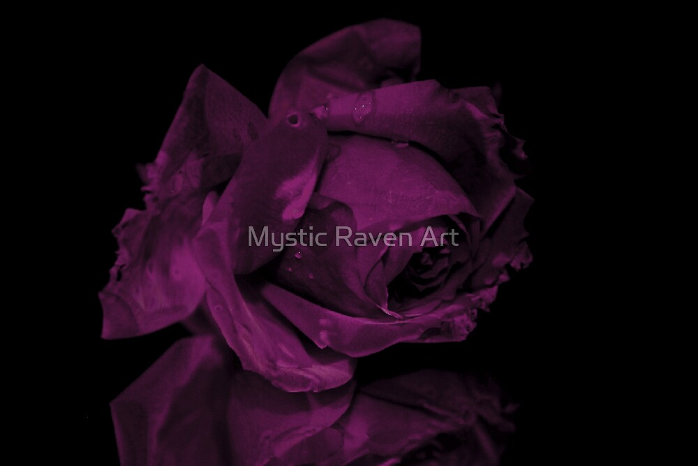 A Rose, is a Rose, is a Rose by Mystic Raven Art