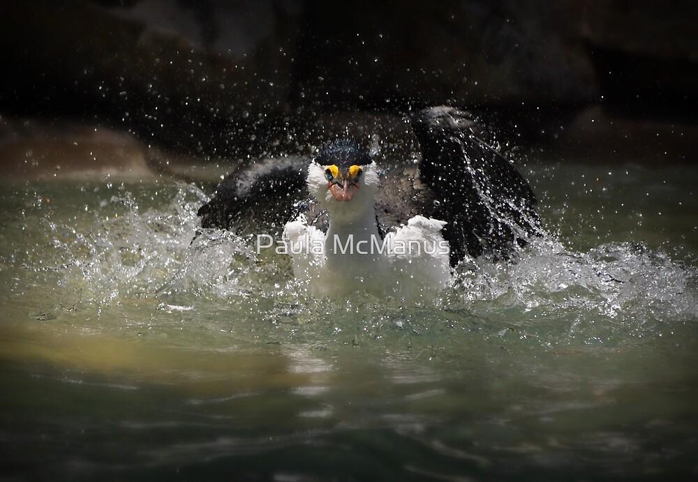Splish Splash by Paula McManus