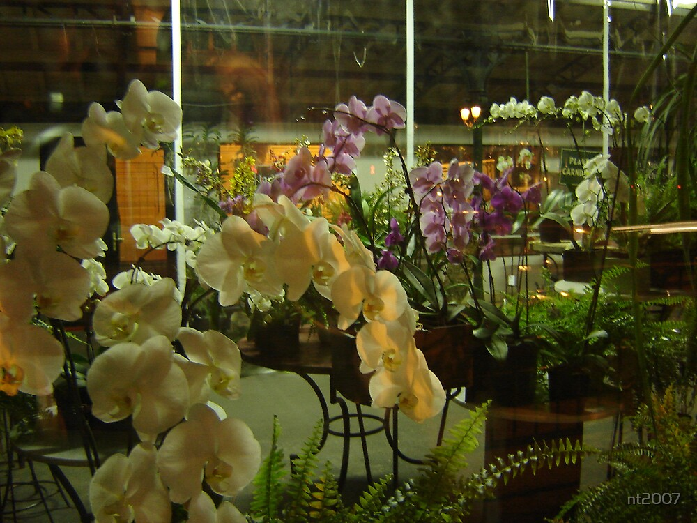 Orchids by nt2007