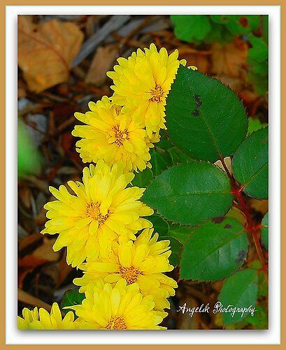 flowers by angeleyes216