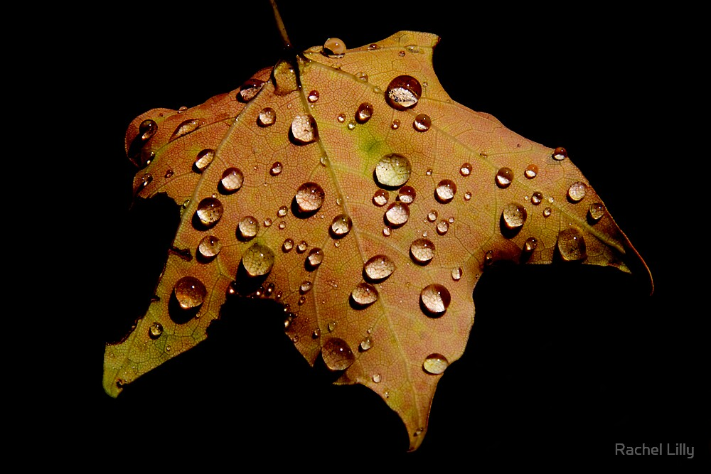 Leaf with Droplets by Rachel Lilly