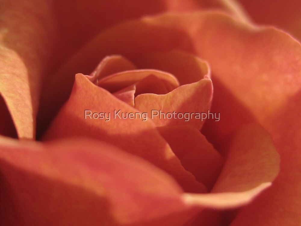 A Rose by Rosy Kueng Photography