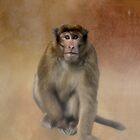 Brown Monkey in Bhutan by Kathy Weaver