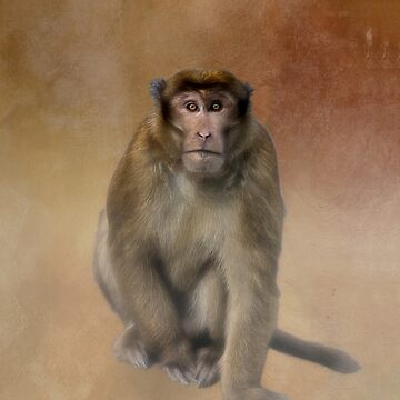 Brown Monkey in Bhutan by kdxweaver