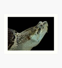 Alligator Snapping Turtle Art Print