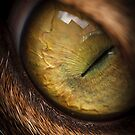 Cat Eye by Jeff Harris