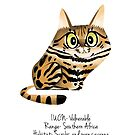 Black footed Cat by rohanchak