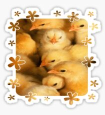 Clutch of Yellow Fluffy Chicks With Decorative Border Sticker