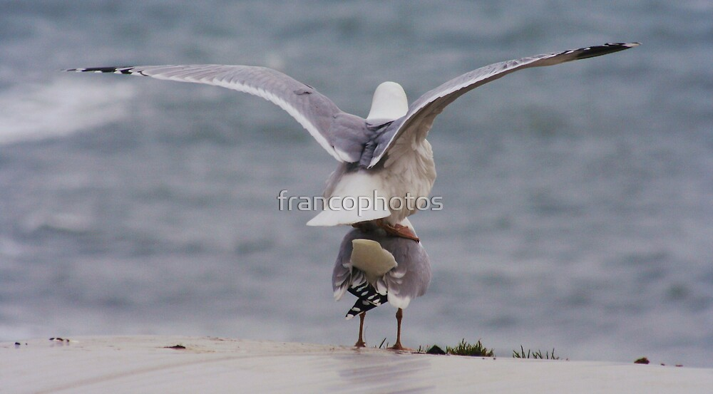 Seagulls Take Off by Franco De Luca Calce
