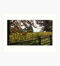 Framing fall, Napa 2008 Art Print