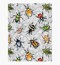 A Bunch of Beetles - Colorful Insect Pattern Photographic Print