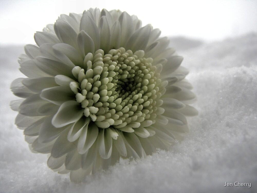 Snowy petals by Jen Millard