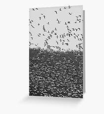 Snow Geese Etc., Etc, Etc. Greeting Card