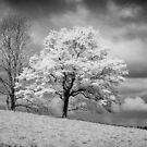 Petworth Tree in White by Mike-Hope by Mike Hope