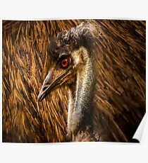 Zoology - Emu Poster