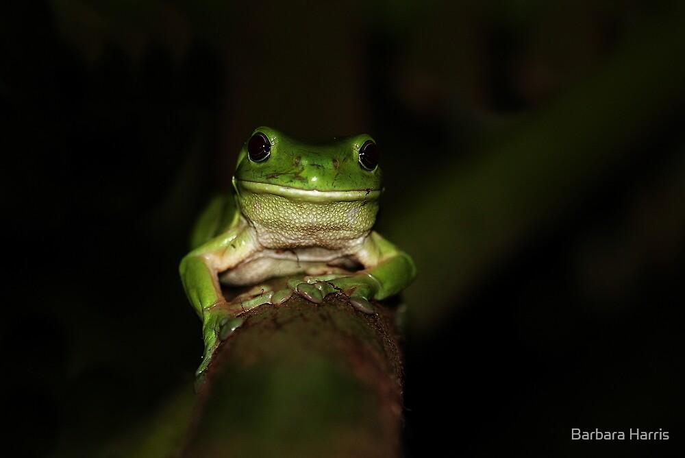 Green Tree Frog-9359  by Barbara Harris