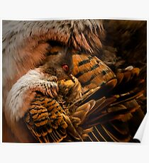 Zoology -  Diamond Dove Poster