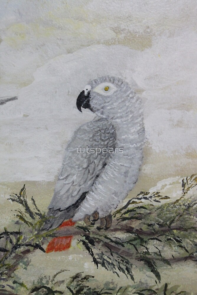 African Grey by wtspears