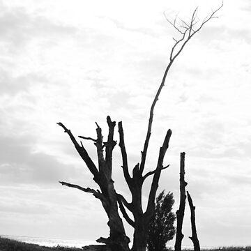 Wood by sydneymariee